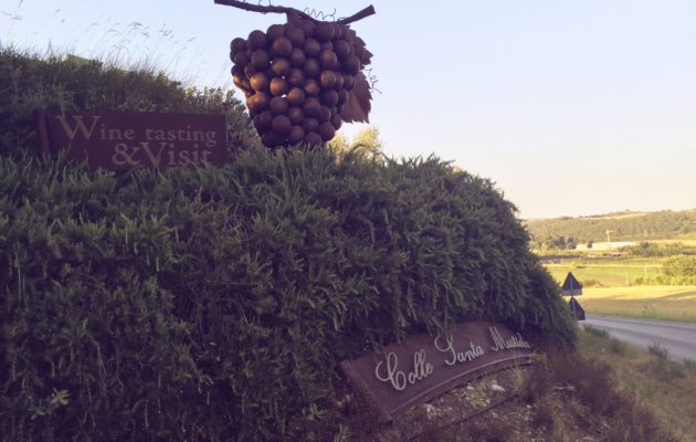 Colle Santa Mustiola - Best wine in Chiusi Chianciano Siena
