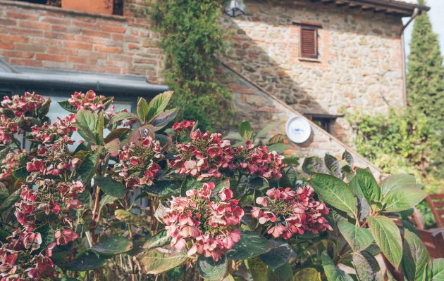 Paciano, Umbria Tuscany Review