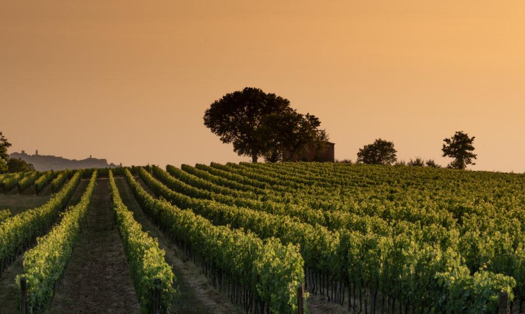Antinori, La Braccesca wine tour